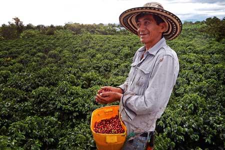 Kaffeebauer in Kolumbien bei der Kaffee Ernte